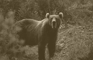 Bienvenida al Coliseo Bear